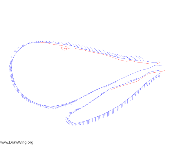 Tetracampidae, wings