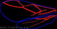 Euphorinae, wings