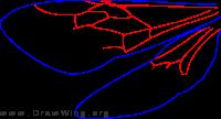 Pseudophotopsidinae, wings