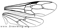 Myrmecia, wings