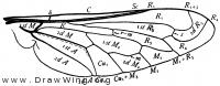 Pantarbes, wing
