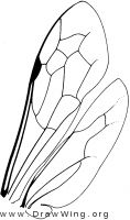 Ceropalinae, wings