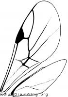 Vanhorniidae, wings