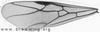 Formica, forewing