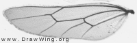 Latibulus argiolus, hindwing