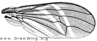 Tritoxa flexa, wing