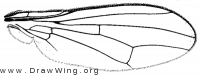 Sepsisoma flavescens, wing