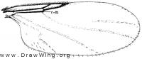 Rhegmoclema truncatum, wing