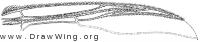 Prosimulium ursinum, wing part