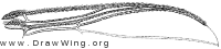 Greniera abdita, wing part