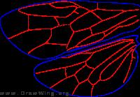 Diprionidae, wing
