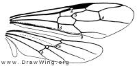 Myrmecia, wings