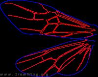 Orussidae, wing