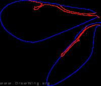 Pteromalidae, wings