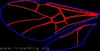 Roproniidae, wings