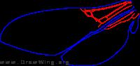 Apterogyninae, wings