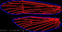 Trioenodes marginata, wings
