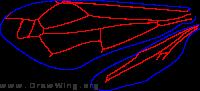 Vespinae, wings
