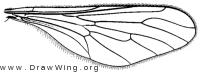 Townsendia, wing