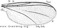 Azana, wing