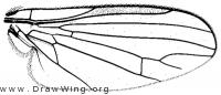 Seri dymka, wing