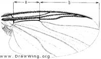 Cnephia dacotensis, wing