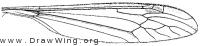 Brachypremna dispellens, wing